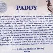 Il 'piccione viaggiatore' Paddy