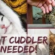 Cat Cuddler Needed