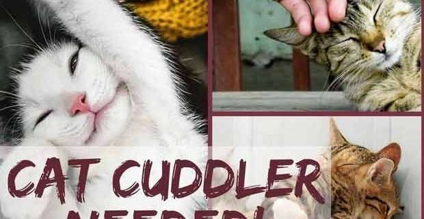 Cat Cuddler Needed